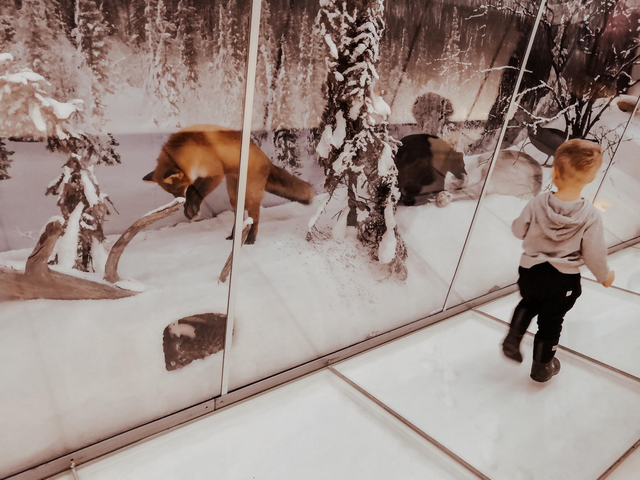suomen luontokeskus haltia tekemistä lapsille