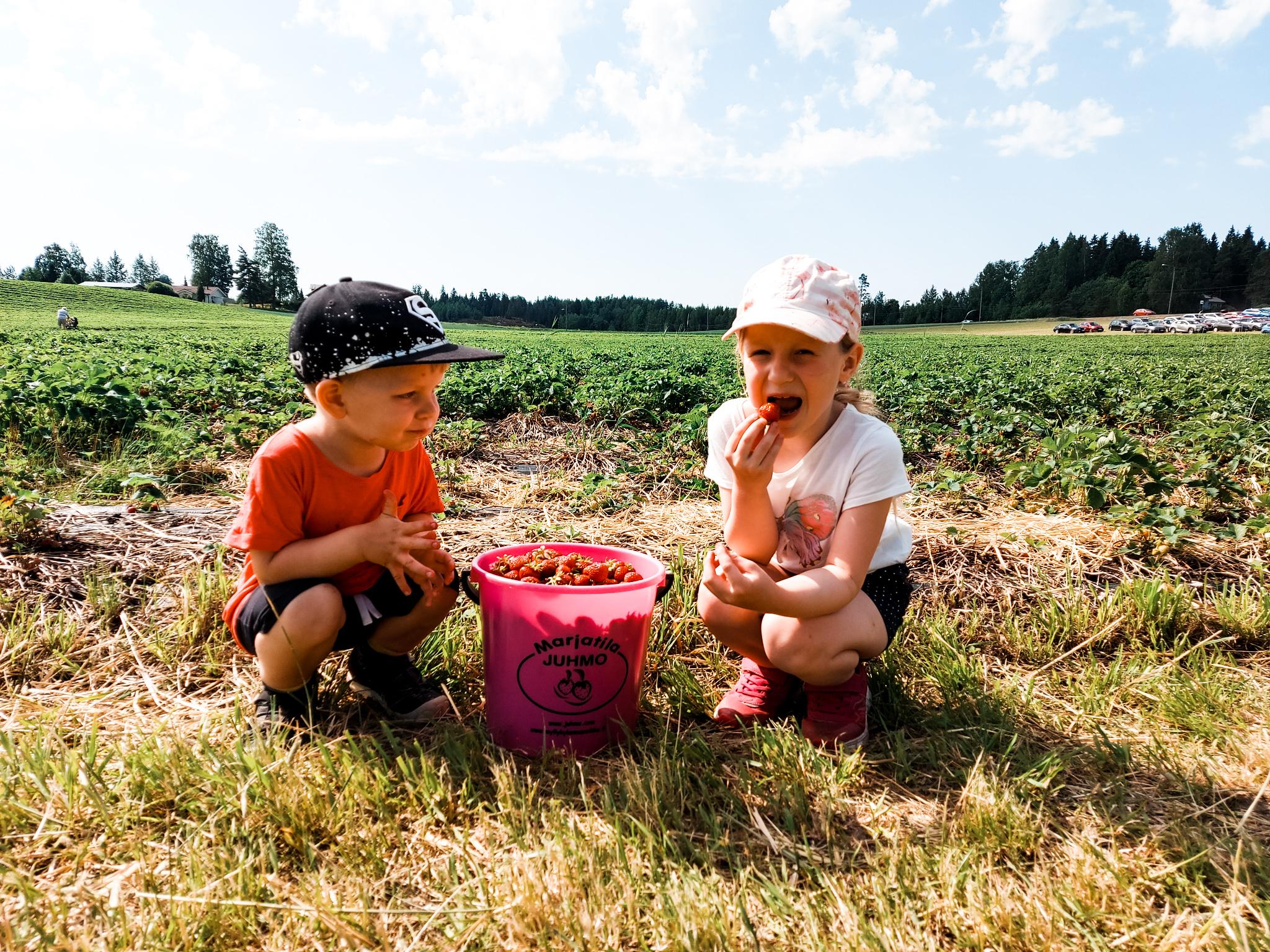 Lapset mansikkapellolla