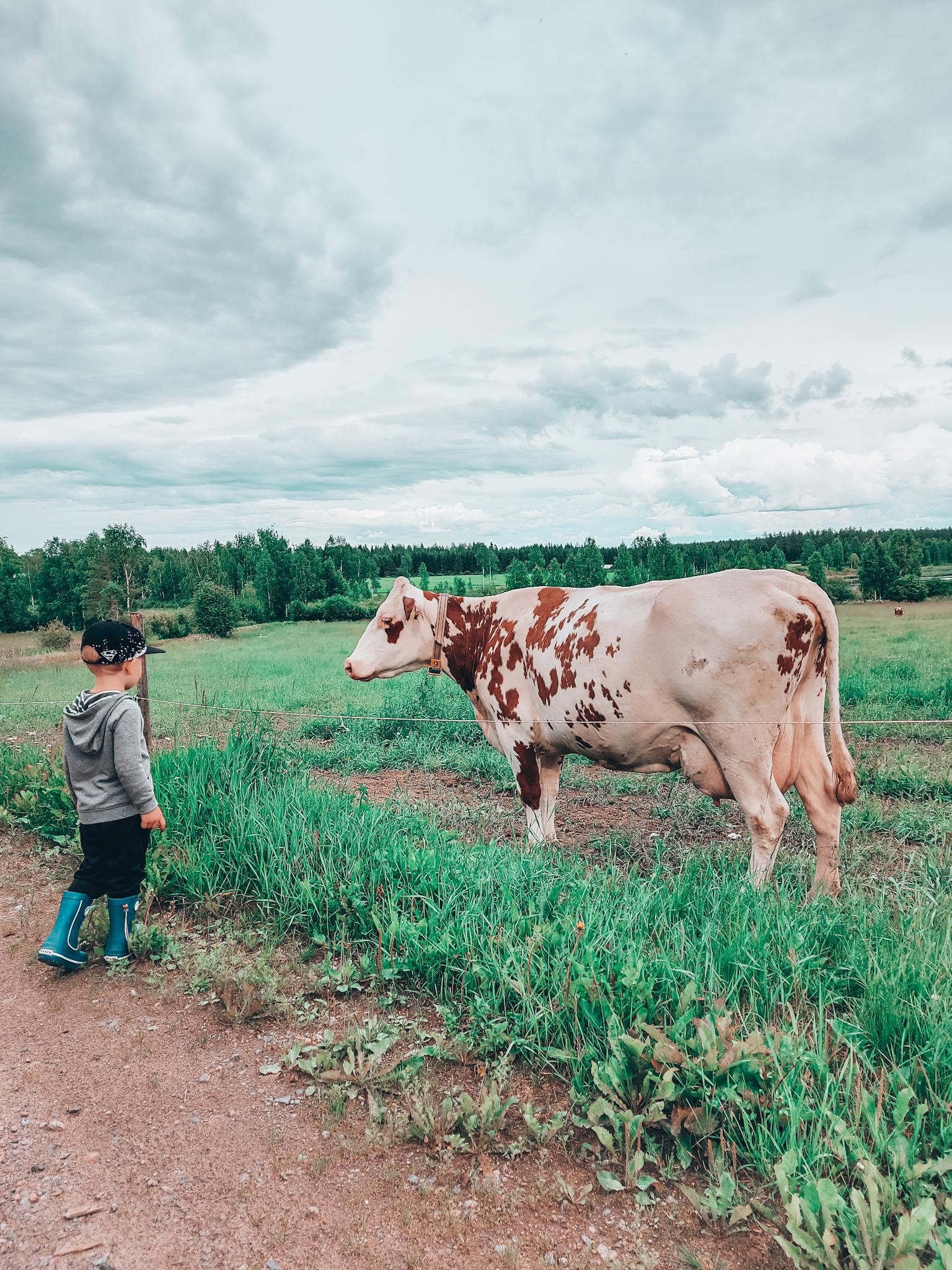 lehmä ja lapset