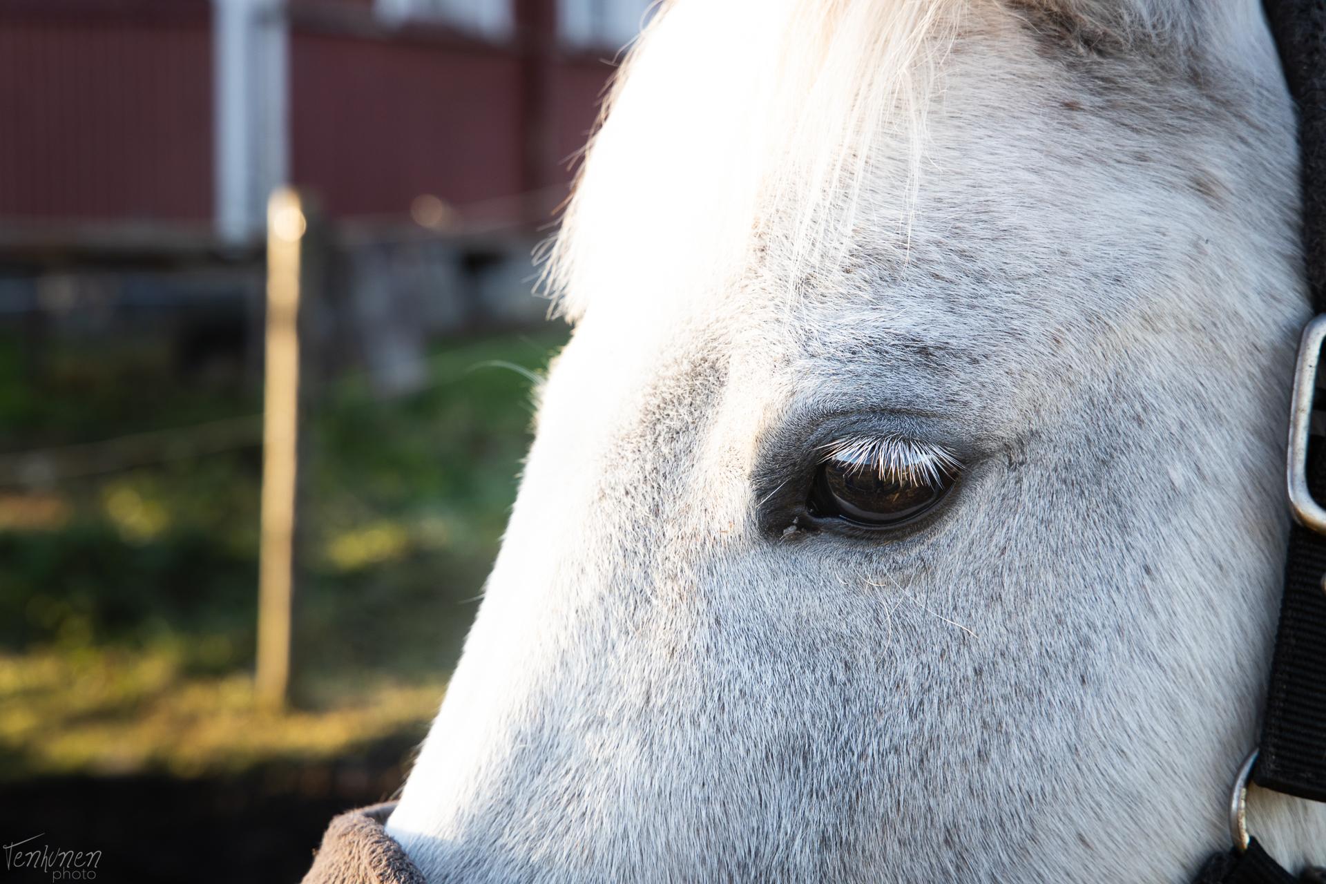 hevonen katsoo