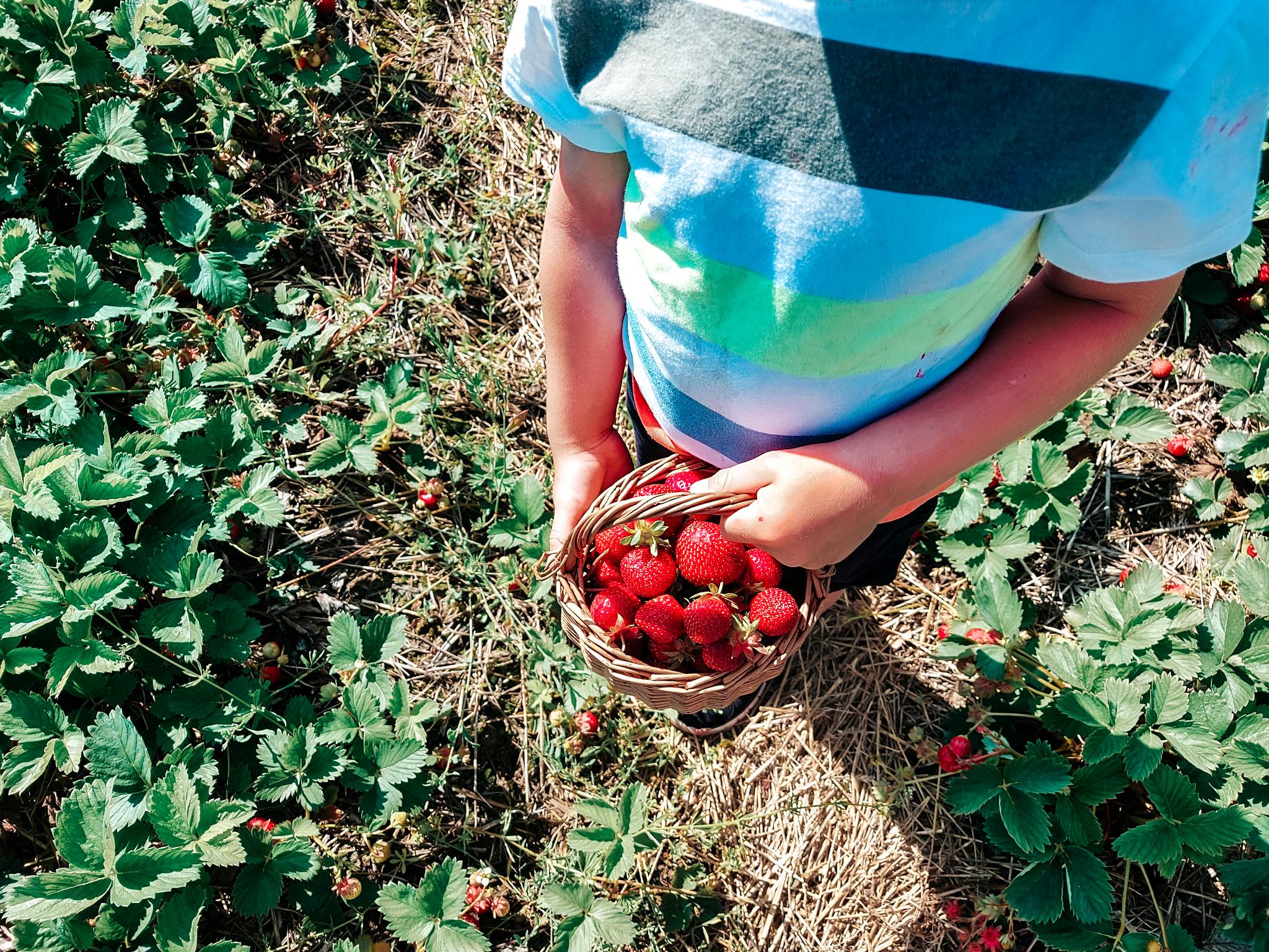 lapset ja mansikat